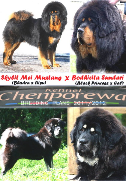 mustang x bodhicita breeding plans 2011-2012_1_1.jpg